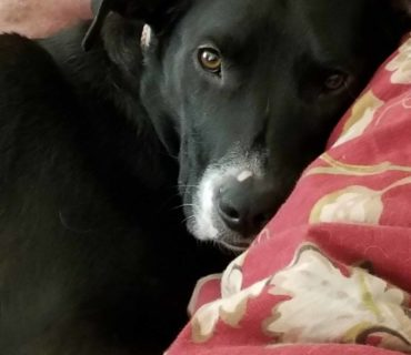 rescue road trips adopted dog maggie mooo