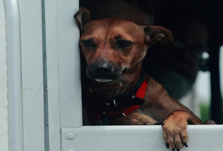 rescue road trips testimonial picture doreen tessa