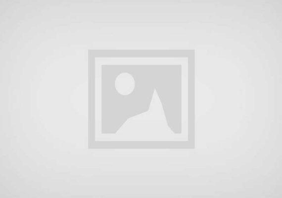 Looziana Basset Rescue