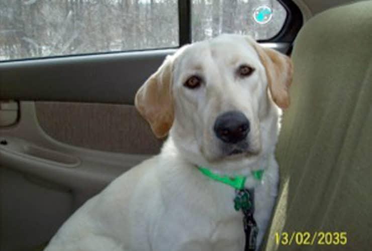 rescue road trips testimonial picture zoe
